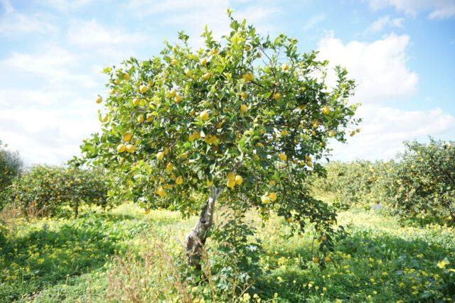 citroen-boom-sicilie